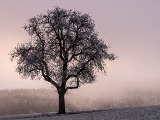 Winter-Baum